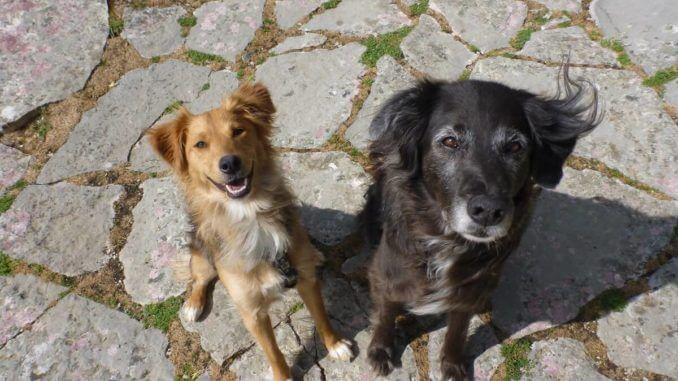 Zwei sitzende Mischlingshunde schauen in die Kamera