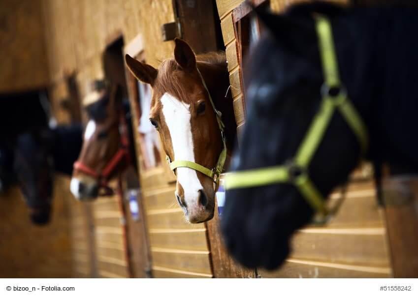 Boxhaltung Pferd - auf genügend Freilauf achten!