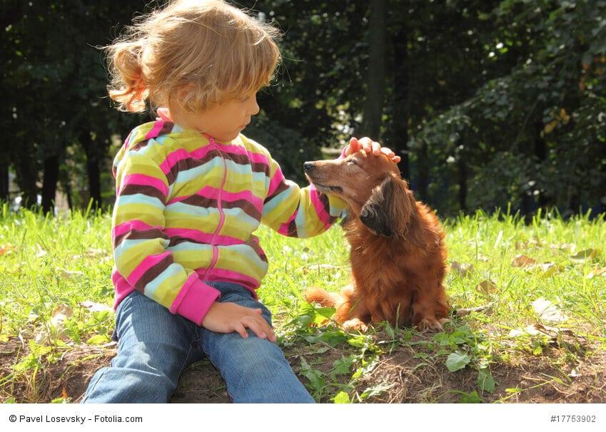 Dackel können durchaus kinderfreundlich sein, wenn du ihnen genügend Rückzugsmöglichkeiten bietest.