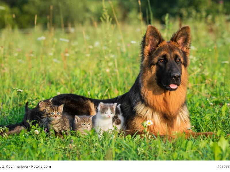 Ob Schafe oder Kätzchen – behüten ist behüten!