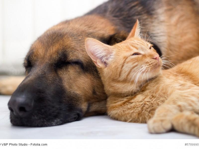 Deutsche Schäferhunde sind auch anderen Tieren gegenüber geduldig und gesellig.