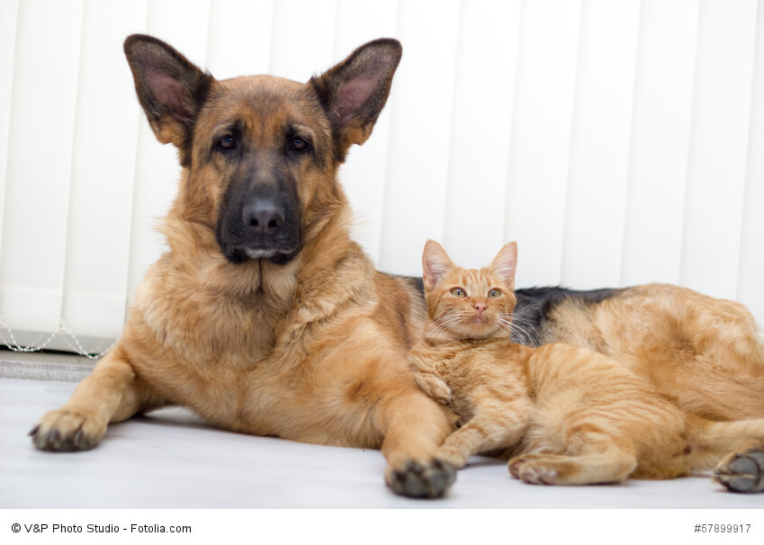 Cat And A Dog Together