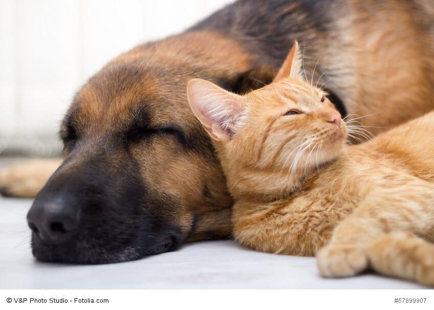 Wurmkuren bei Hunden und Katzen