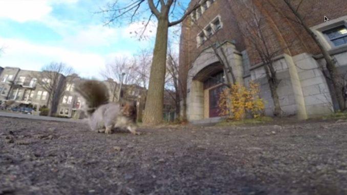 Eichhörnchen klaut Kamera