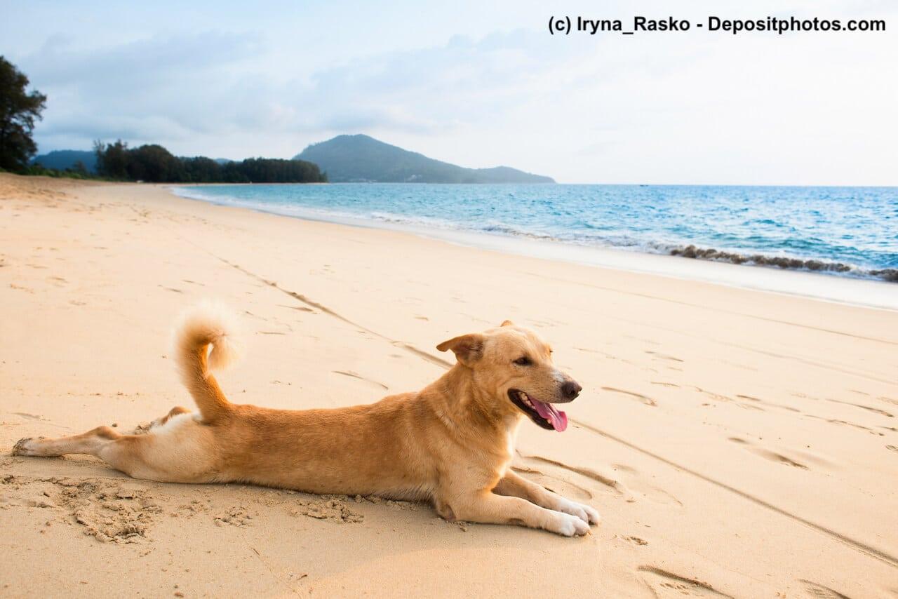 Ein Hund liegt auf dem Bauch an einem Strand