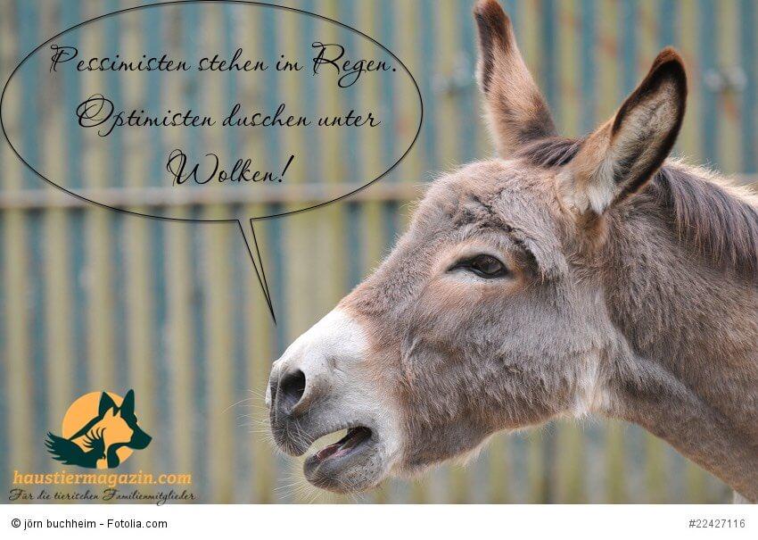 Bildergalerie Susser Tierbilder Bei Uns Im Haustiermagazin