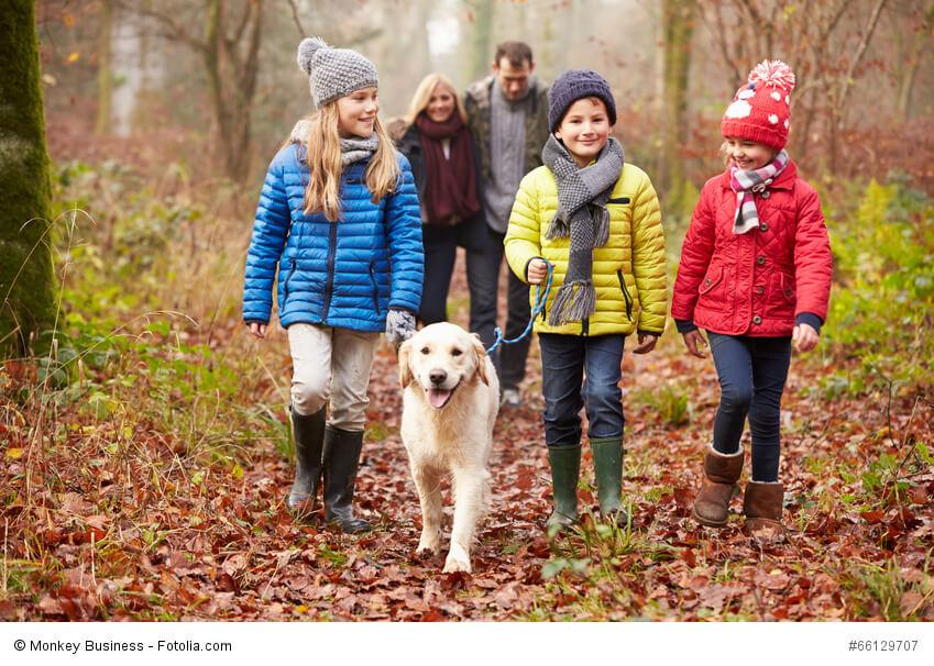 Du musst dir keine Gedanken machen, wenn deine Kinder mit deinem Golden Retriever spazieren gehen.