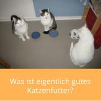 gutes-katzenfutter