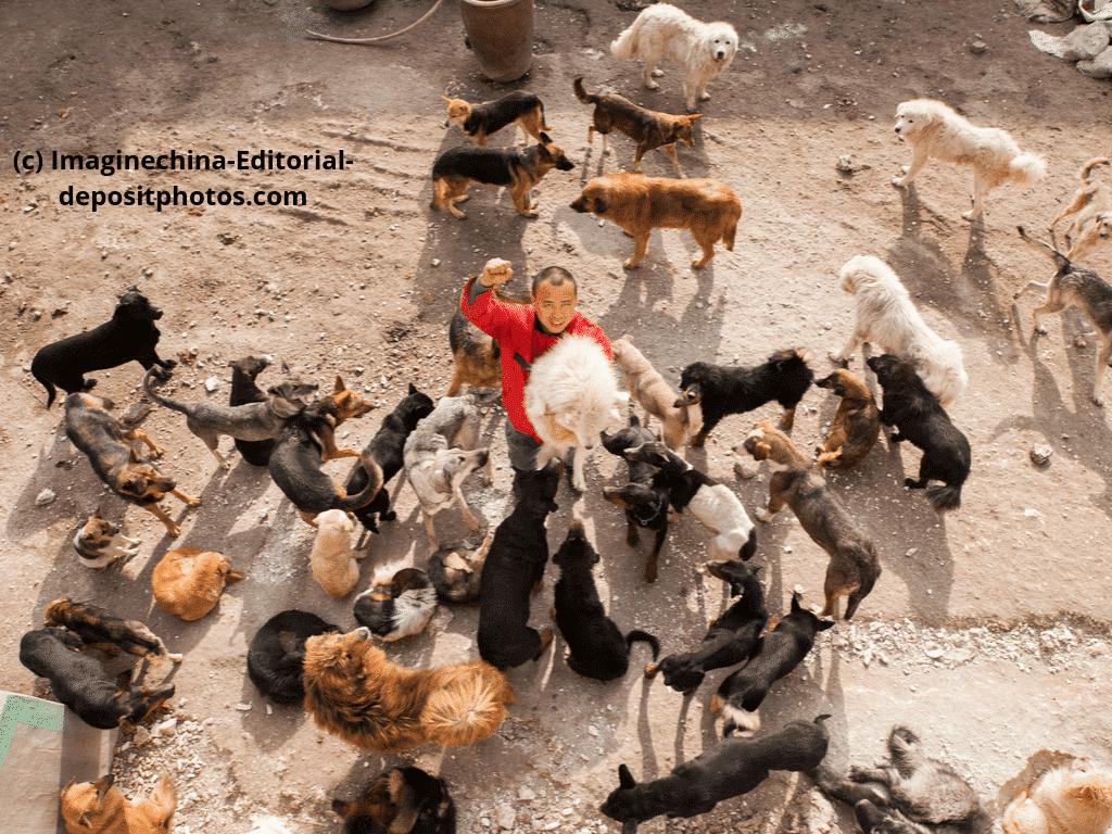 Hof voller geretteter Straßenhunde