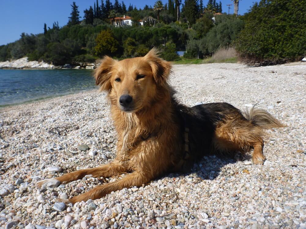 Mischlingshund an einem Kiesstrand