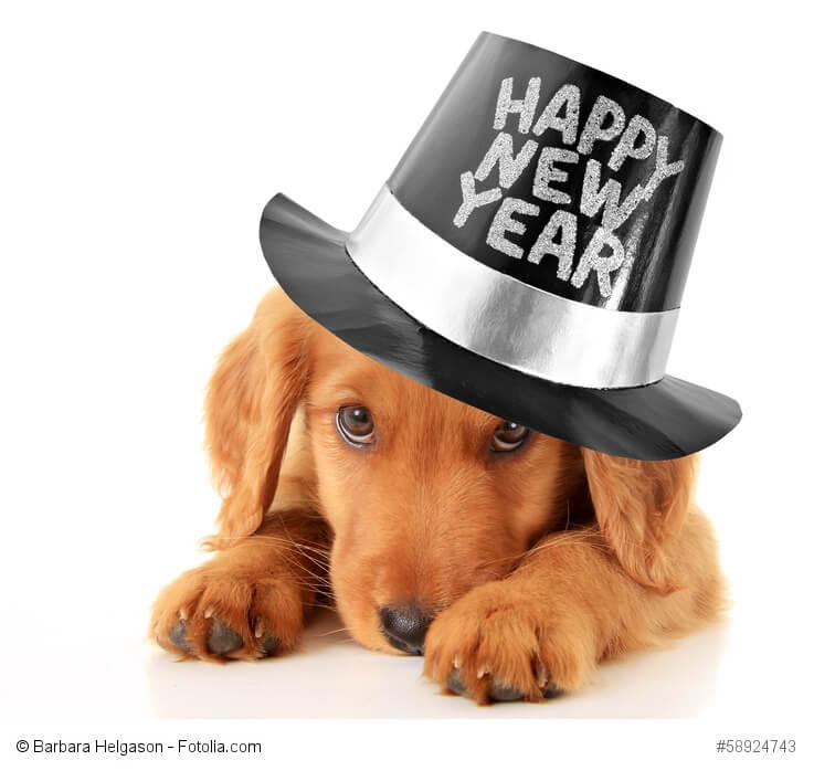 Junger Hund mit Zylinder mit Happy new year