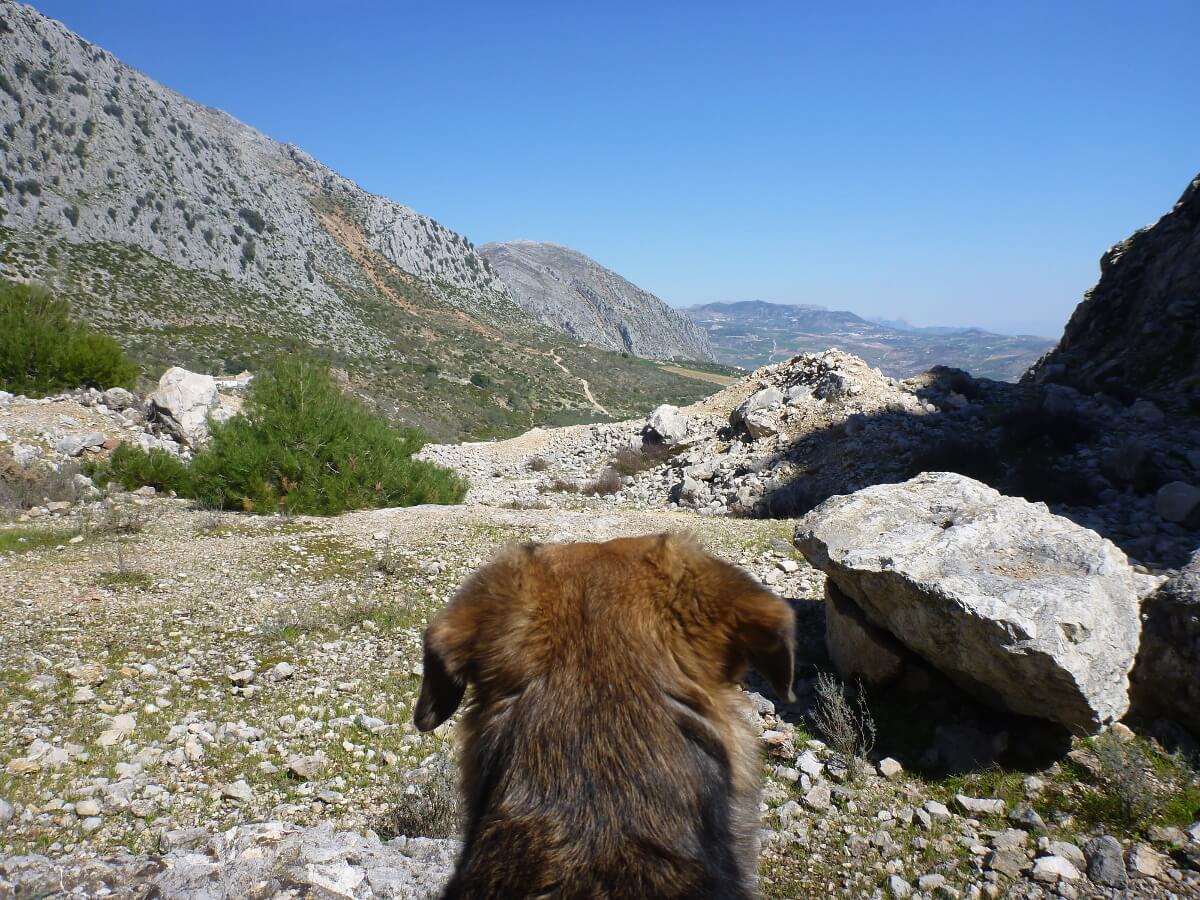 Ein Hundekopf von hinten in den Bergen