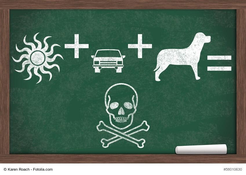 Tafelzeichung den Hund bei Hitze nicht im Auto lassen