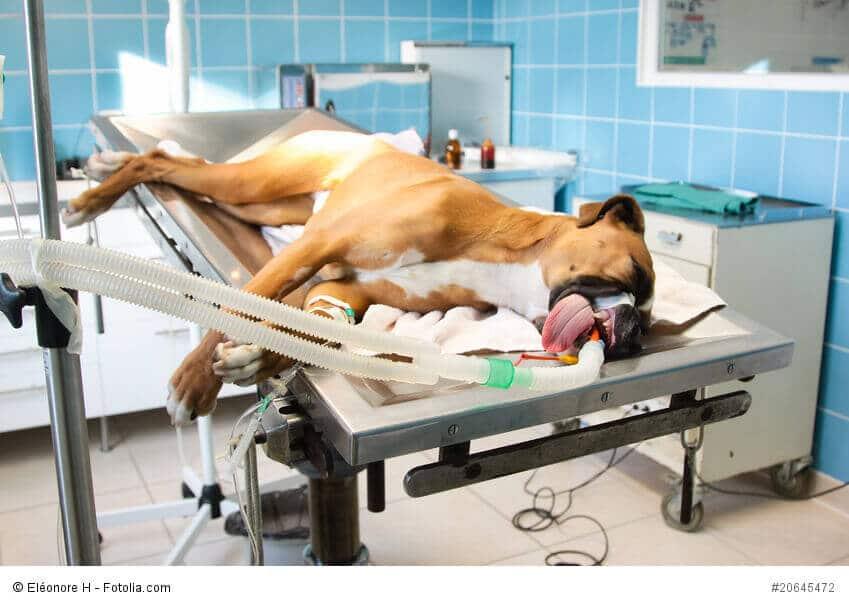 Ein Hund in einem OP-Saal auf einer Liege