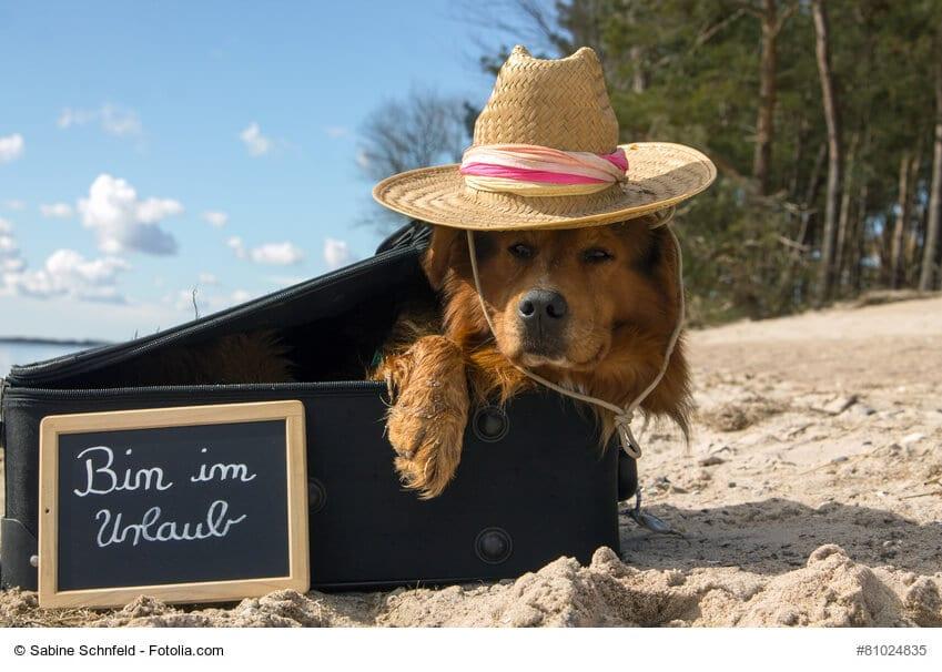 Hund liegt in einem Koffer am Strand und trägt einen Sonnenhut