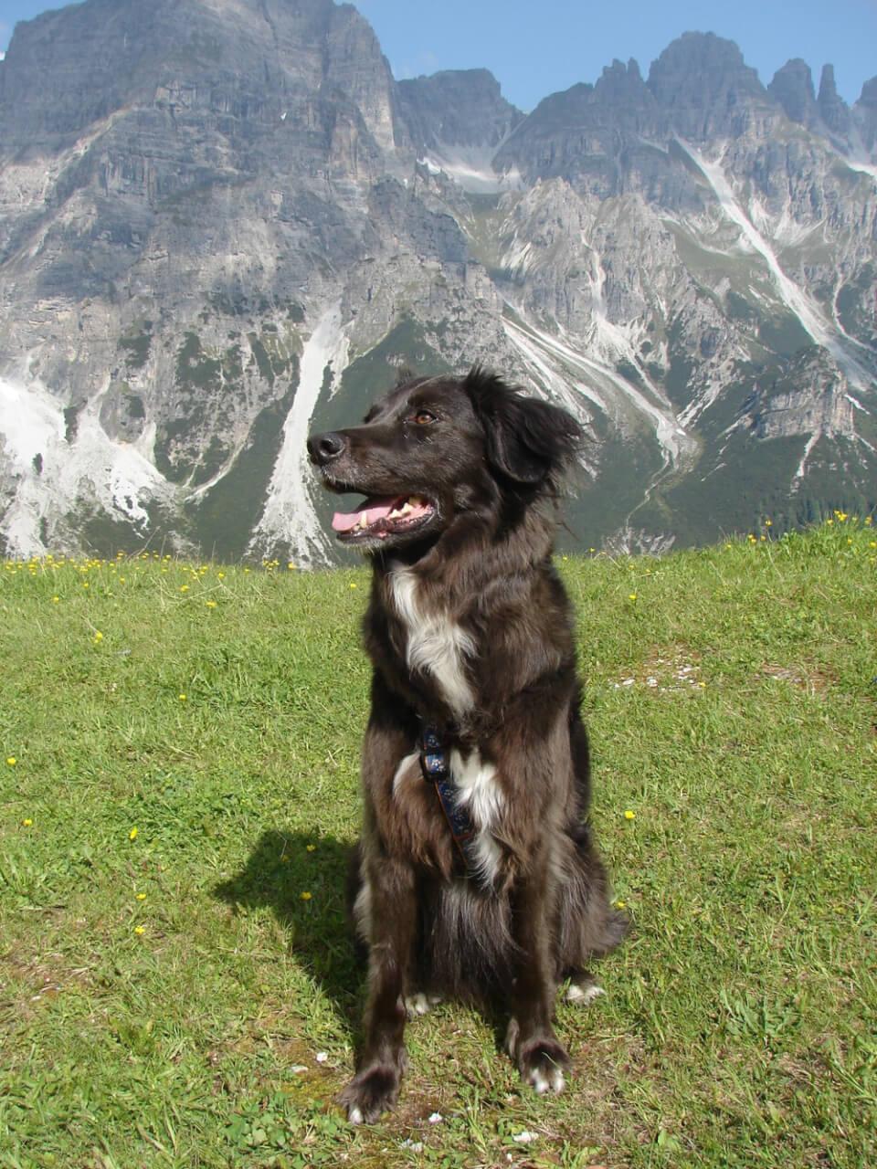 Schwarzer Mischling mit weißer Brust vor einem Berg