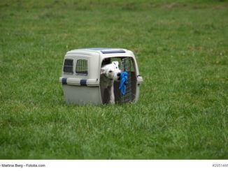 Weißer Terrier in einer Hundebox auf einer Wiese