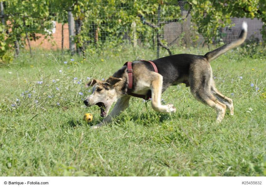 Ein Hund schnappt nach einem Ball