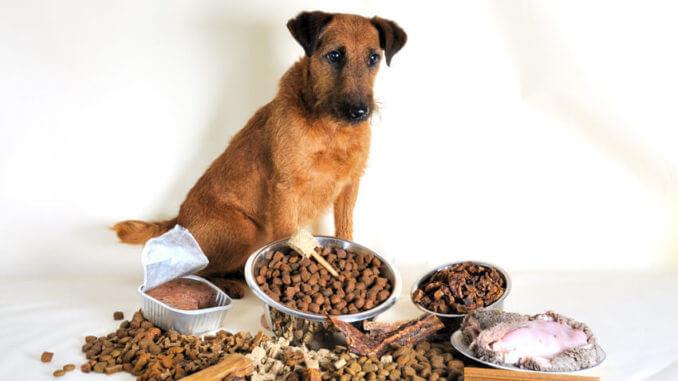 Brauner Terrier sitzt vor verschiedenem Futter