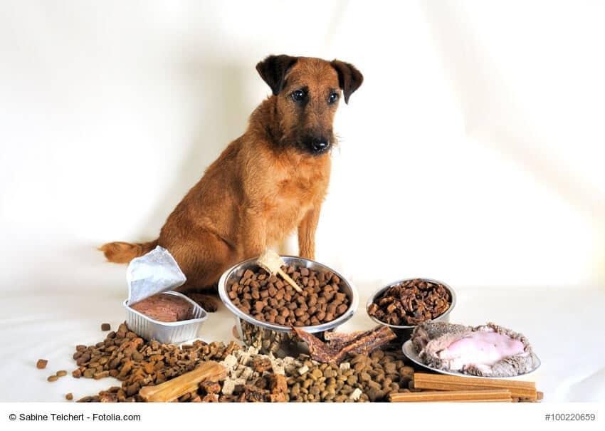 Brauner Terrier sitzt vor verschiedenem Fertigfutter. Bei Allergien könnte eine vegane Hundeernährung helfen.