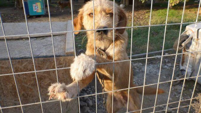 Mischlingshund an Kette hinter Zaun