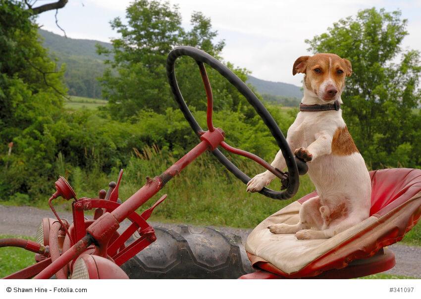 Hund auf dem Fahrersitz eines Treckers
