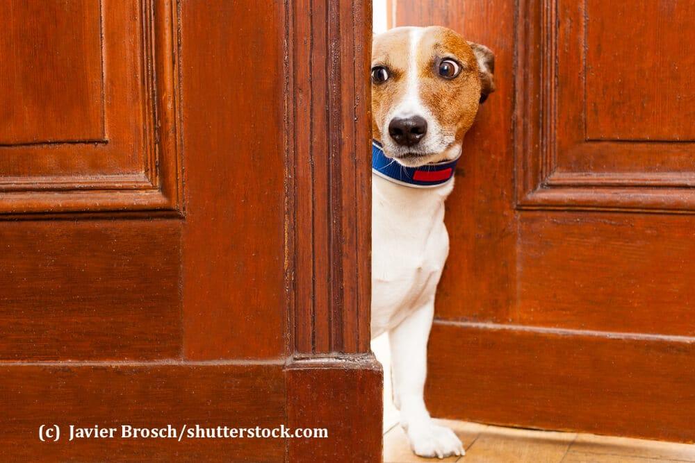 Ein Hund steht mit einem ängstlichen Gesicht in einer offenen Wohnungstür