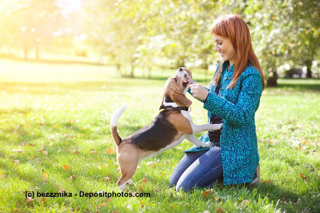 Eine junge Frau kniet auf einer Wiese und spielt mit einem Hund - die Bedürfnisse des Hundes zu kennen hilft auch bei einer gesunden Ernährung.