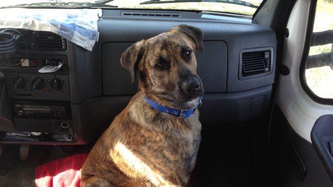 Ein erwachsener Hund mit blauem Halsband sitzt im Fußraum eines Autos