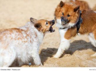 zwei gegenüberstehende Hunde fletschen die Zähne