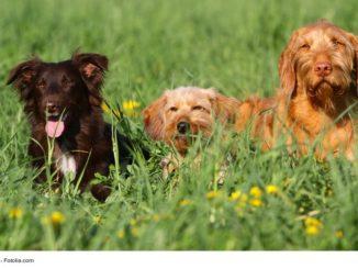 drei Hunde liegen in der Wiese