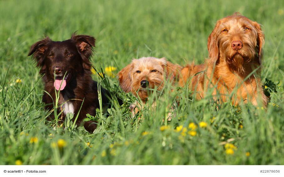 Erstkontakt mit Hunden – Tipps für ein korrektes Kennenlernen