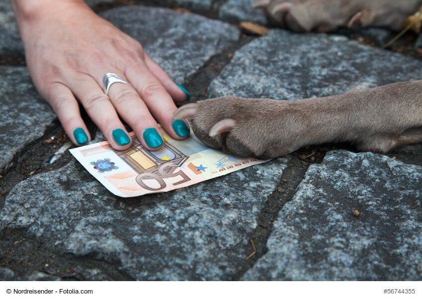 Eine Frauenhand mit lackierten Nägeln und eine Hundepfote auf einem 50-Euro-Schein