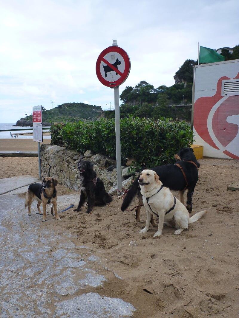 Vier Hunde sind an einem Hundeverbotsschild angeleint