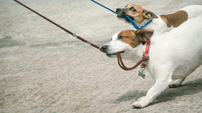 Ohne Hundeerziehung endet das Zusammenleben in einem ewigen Kampf Mensch gegen Hund