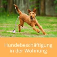 hundebeschaeftigung
