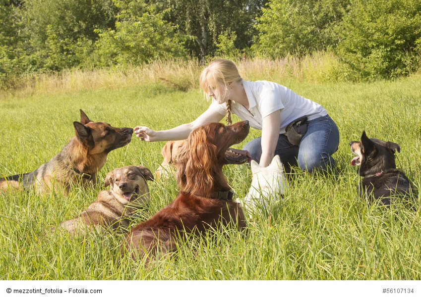 Hundetrainerin füttert Hunde, die um sie herum im Gras liegen