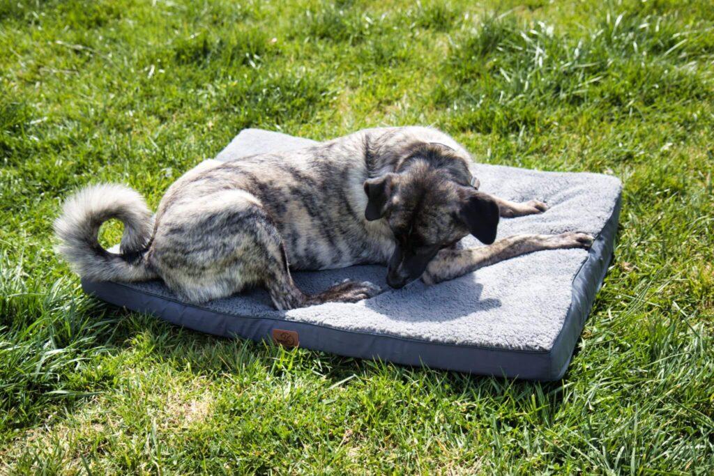 Die Oberfläche vom Hundekissen von Bedsure ist zwar kuschelig weich aber trotzdem schmutzabweisend. Das findet Testhündin Inge dufte!