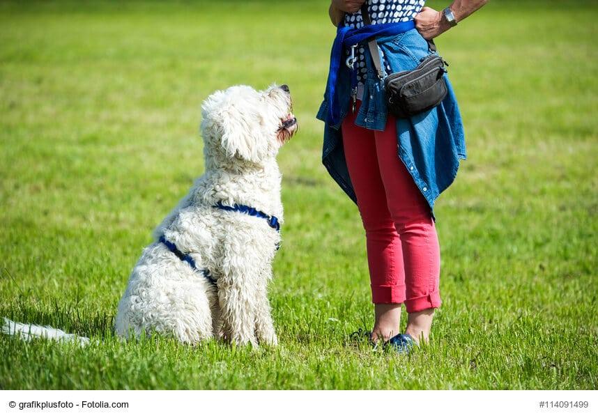 Ein weißer Hund sitzt aufmerksam vor einer Frau.