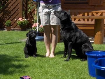 Neben einer Frau sitzen ein großer schwarzer und ein kleiner schwarzer Hund und schauen sie aufmerksam an