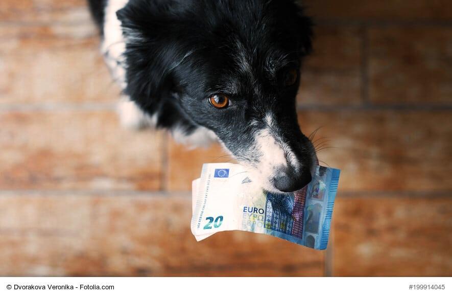 Ein Bordercollie hält 20-Euro-Scheine im Maul und blickt von unten in die Kamera