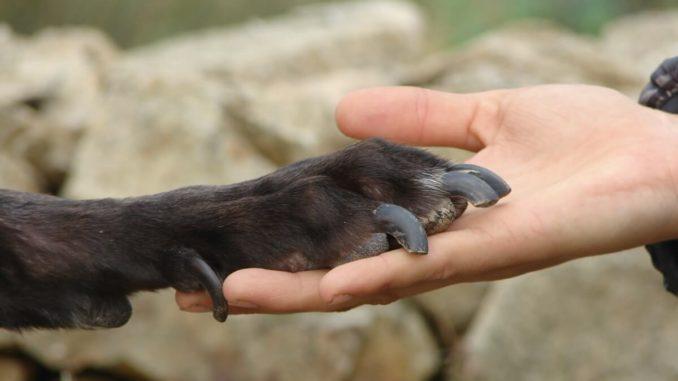 Eine Hundepfote liegt auf einer Hand