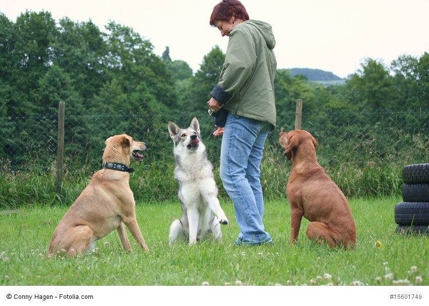 Hundetrainerin mit drei Hunden