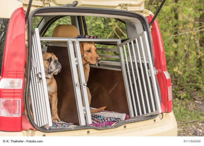 Zwei Hunde sitzen im Kofferraum in einer geöffneten Transportbox
