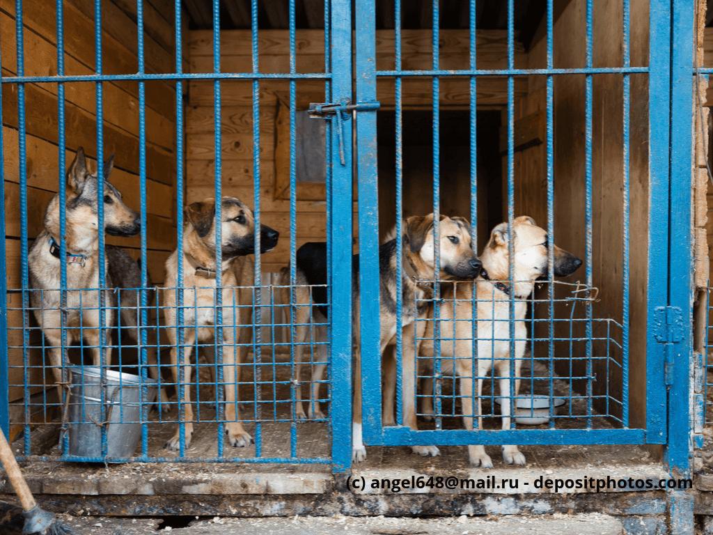 Käfig mit vier Hunden