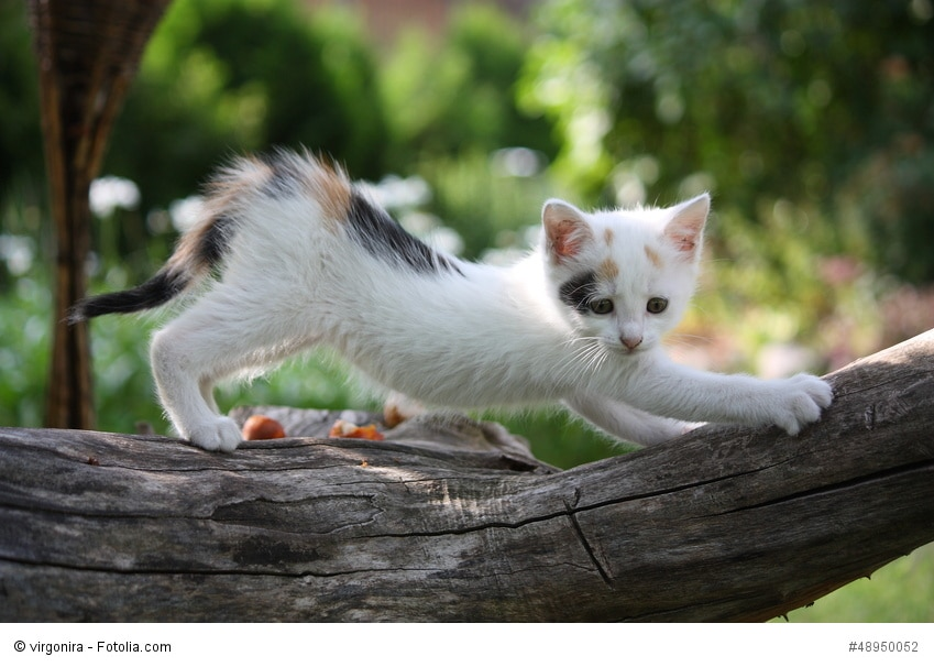 Kleine weiße Katze kratzt an einem Baum im Garten
