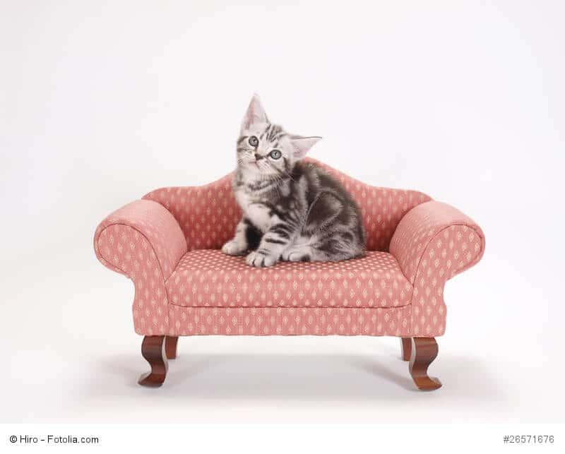 Katzenurin Und Geruch Entfernen Wir Haben Hier Alle Tipps Und Tricks