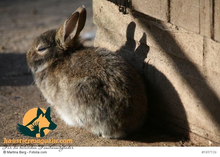 raues Kaninchen vor dem Stall in der Sonne