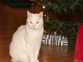 Kater vor Weihnachtsbaum mit Geschenken