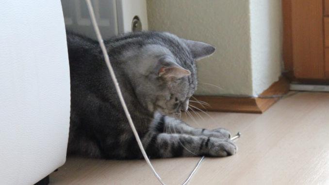 Eine Katze Liegt Auf Dem Boden Und Hat Eine Schnur In Den Pfoten
